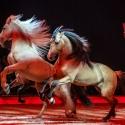 Cavalluna: Geheimnis der Ewigkeit